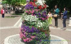 Cvetna atrakcija na Promenadi